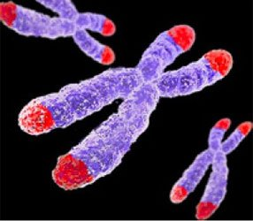 telomere chromosome photo