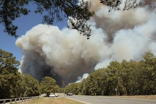 Bastrop Texas: The smoke covered Lost Pines in Bastrop State Park