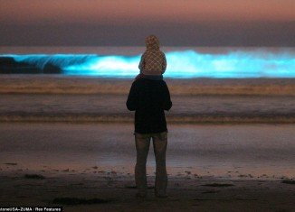 Michael Dermyer and his 5 year-old son Colin watching the waves glow neon blue from the red tide at Moonlight Beach in Encinitas, California
