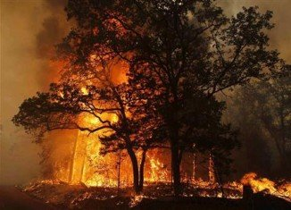 Bastrop Texas major wildfire: Flames over a road near Bastrop State Park (Reuters)