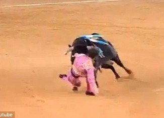 Juan Jose Padilla, a Spanish matador blinded in one eye after being gored during a bullfight announced today he will return to the ring as he made his first public appearance since the horrific incident