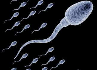 Experiments in mice found that gene Katnal1 was vital for the final stages of making sperm