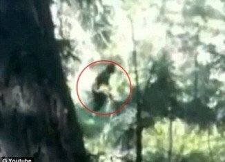 The teenagers were in the woods near Mink Creek in Franklin County when they said they noticed a dark creature watching them from a ridge