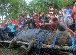 Lolong, the one-ton crocodile caught in Bunawan, Philippines, has been named the world's largest saltwater crocodile in captivity