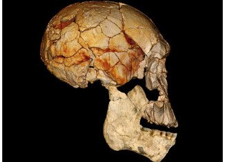 Researchers have discovered that fossils from Northern Kenya show that a new species of human lived two million years ago