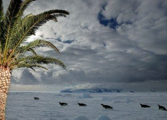 Scientists drilling deep into the edge of modern Antarctica have pulled up proof that palm trees once grew there
