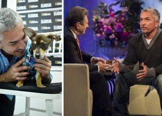 Alan Titchmarsh savages dog trainer Cesar Millan who caused TV outcry with his unconventional techniques to rehabilitate ill-disciplined dogs