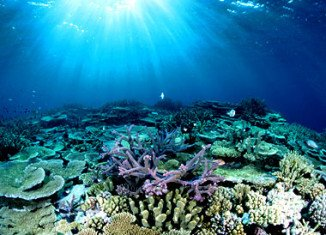 Australia's Great Barrier Reef has lost more than half its coral cover in the past 27 years
