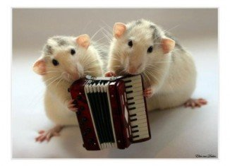 Mice may have the ability to learn songs based on the sounds they hear