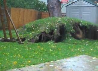Residents on Long Island, New York, felt the wrath of Superstorm Sandy after it uprooted their massive oak tree, sending it crashing into a neighbors' garden