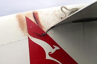 A 10 ft scrub python was battling to retain its grip on the wing as a Qantas plane made its way between the Australian town of Cairns and Port Moresby in Papua New Guinea