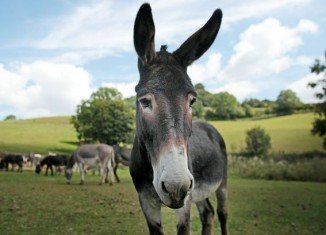 A study published by South Africa's Stellenbosch University found that donkey, water buffalo and goat meat have been sold as burgers and sausages in South Africa
