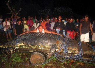 Lolong, the largest saltwater crocodile in captivity, has died in the Philippines
