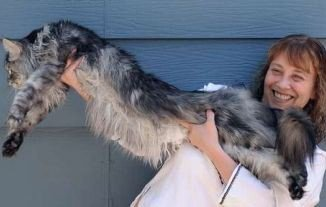 Stewie, the world's longest domestic cat, a 48.5 in Maine Coon, has died at the age of eight