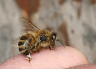 Chemicals found in bee stings could help prevent the spread of HIV