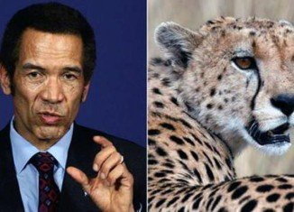 Botswana President Ian Khama needed stitches on his face after being scratched by a cheetah