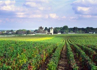 A new research has found evidence of the earliest winemaking in France, which indicates it has an Italian origin