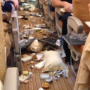 Singapore Airlines chaotic in-flight mess after sudden bout of turbulence hit jet while meal was served