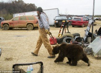 Porter Ridge's Jeff the Bear Man keeps eight brown bears in his back garden