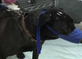 A recently discovered virus has killed multiple dogs in Ohio