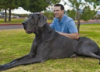 Giant George was the world's tallest dog according to the Guinness World Records