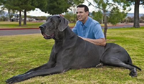 25 Of The Worlds Largest Dog Breeds Youll Want To Own