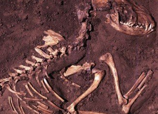 The new research, based on a genetic analysis of ancient and modern dog and wolf samples, points to a European origin at least 18,000 years ago