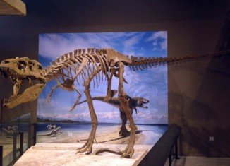 The newly discovered dinosaur measured about 24 feet long, weighed around 2.5 metric tons, and had a large head filled with sharp teeth