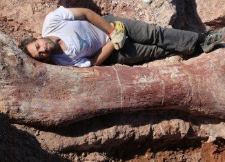 Paleontologists in Argentina have discovered fossilized bones of a dinosaur believed to be the largest creature ever to walk the Earth
