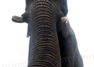 Scott Brierley said he found a photo of African elephant Latabe on his phone after it was returned to him by keepers at West Midlands Safari Park