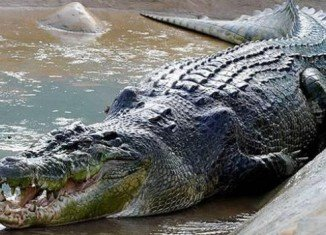 Zookeeper Trent Burton has been attacked by John the crocodile during a feeding show at Shoalhaven zoo in New South Wales