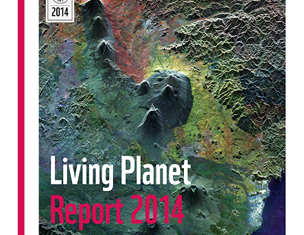 The 2014 Living Planet Report suggests wildlife populations have halved in 40 years