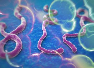 The Ebola outbreak has killed more than 3,860 people in 2014, mainly in West Africa
