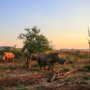 5 Wild Animals that You See When Camping in South Africa