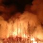 Kincade Fire: State Emergency Declared in California as Wildfires Rage